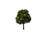 ROSE TREE.png