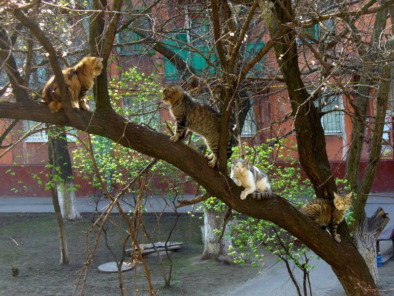 Коты прилетели...весна