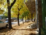 Моя улица осенью