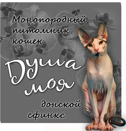 http://img-fotki.yandex.ru/get/5628/63012238.2e/0_925ab_65b53b4_L.jpg