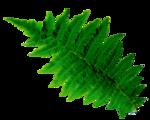 Зелень, приправа
