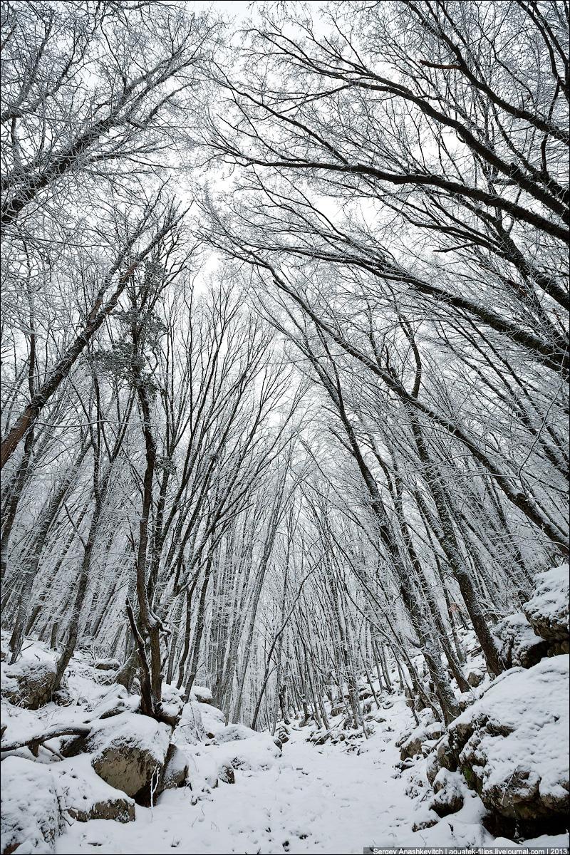 Староримская дорога в Карадагском лесу