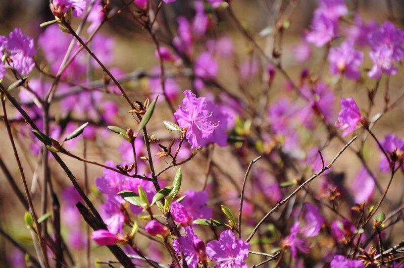 Сибирская весна.