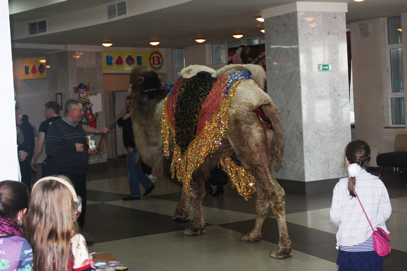 Нижегородский цирк, шоу Гии Эрадзе