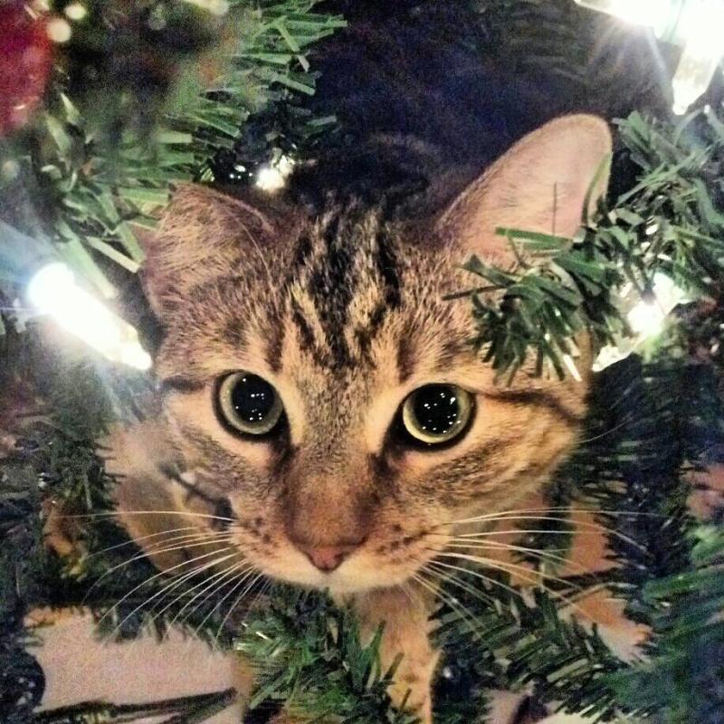Коты на ёлке - фото 4