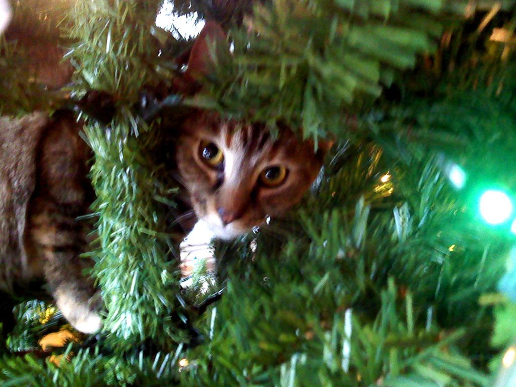 Коты на ёлке - фото 33