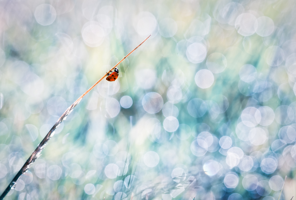 Beautiful Nature Photographs by BLOAS Meven