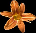 feli_gs_flower4.png
