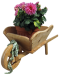 feli_gs_wheelbarrow with flowers.png