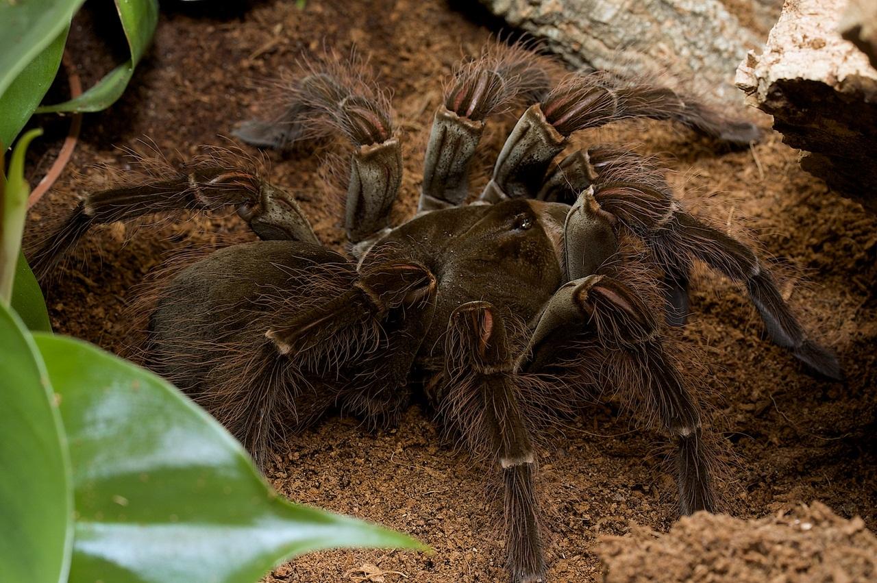 женские картинка большой паук в мире оснащены