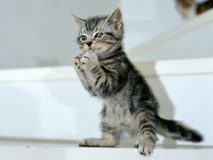 Домашние кошки злые, но многие об этом не знают