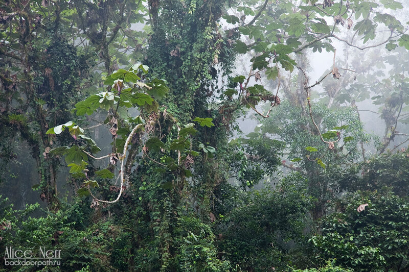 влажный лес, венесуэла, rainforest