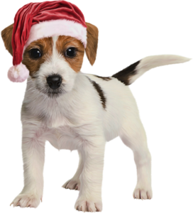 собака в шапочке санты