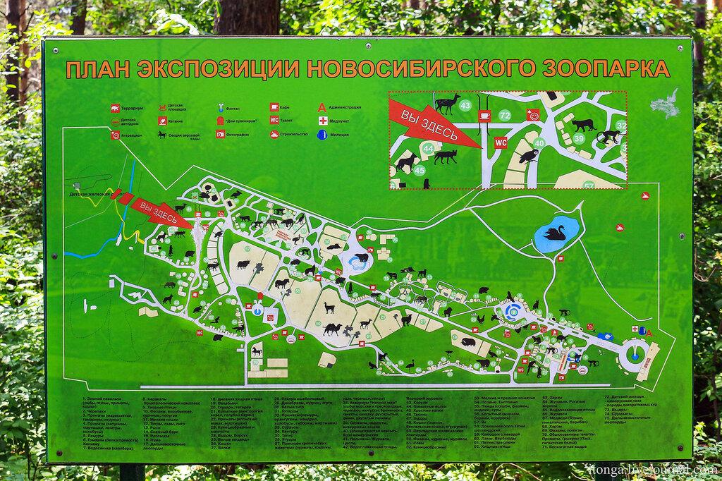 Карта Новосибирского зоопарка