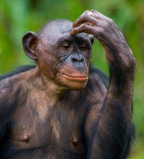 Фотографии животных отлучших фотографов анималистов России 0 145e3e f0c65b70 orig