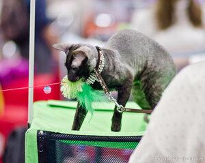 Выставка кошек Весенний Кэт-Салон