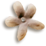 kimla_LS_flower2_sh.png