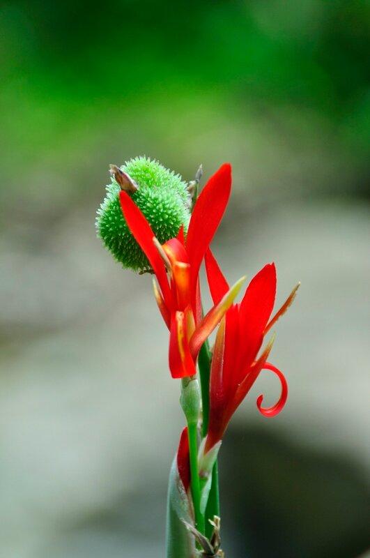 цветок у Водопада в Мони