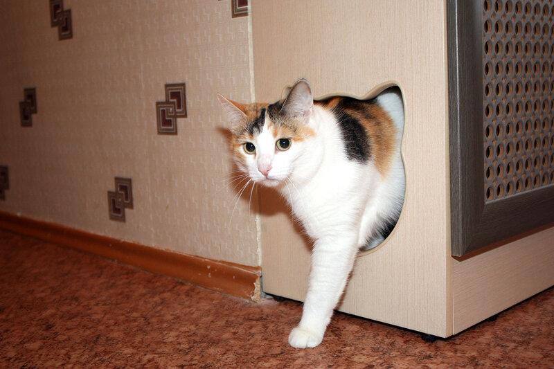 Кошачий туалет наполнитель своими руками