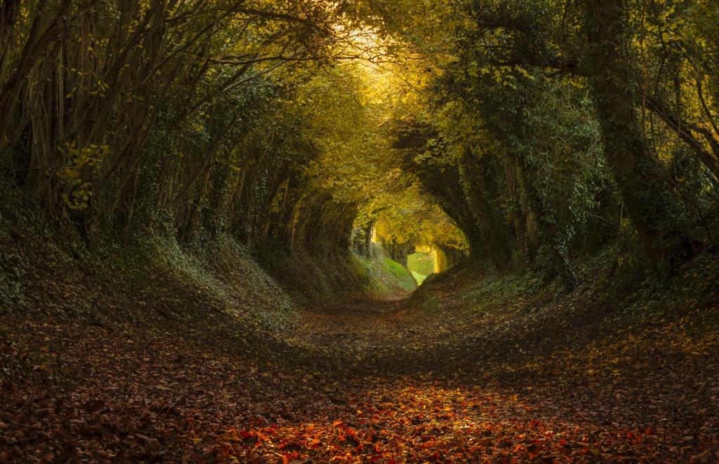 Сказочный тоннель в англии 5 фото