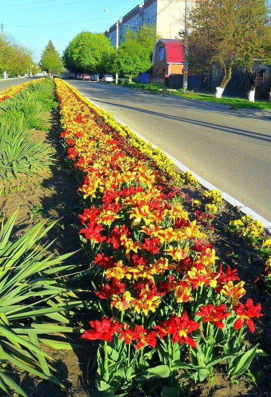 Цветы, апрель