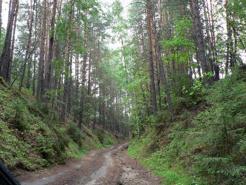 Раскаты дорога к Ветлуге