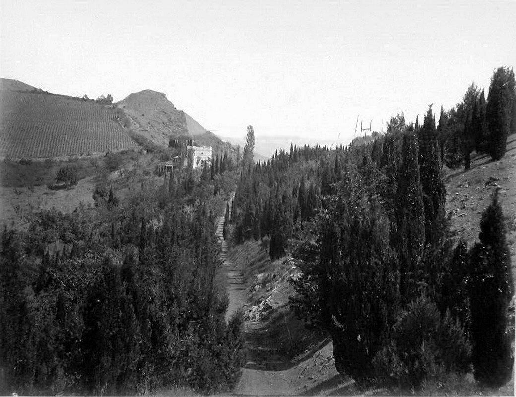 22. Вид аллеи в горах у деревни Кучук-Ламбат; слева на втором плане - виноградники