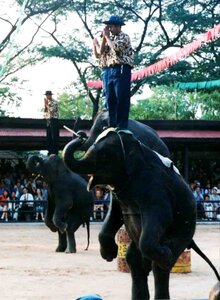 Анна Печенова, Тайланд, шоу слонов