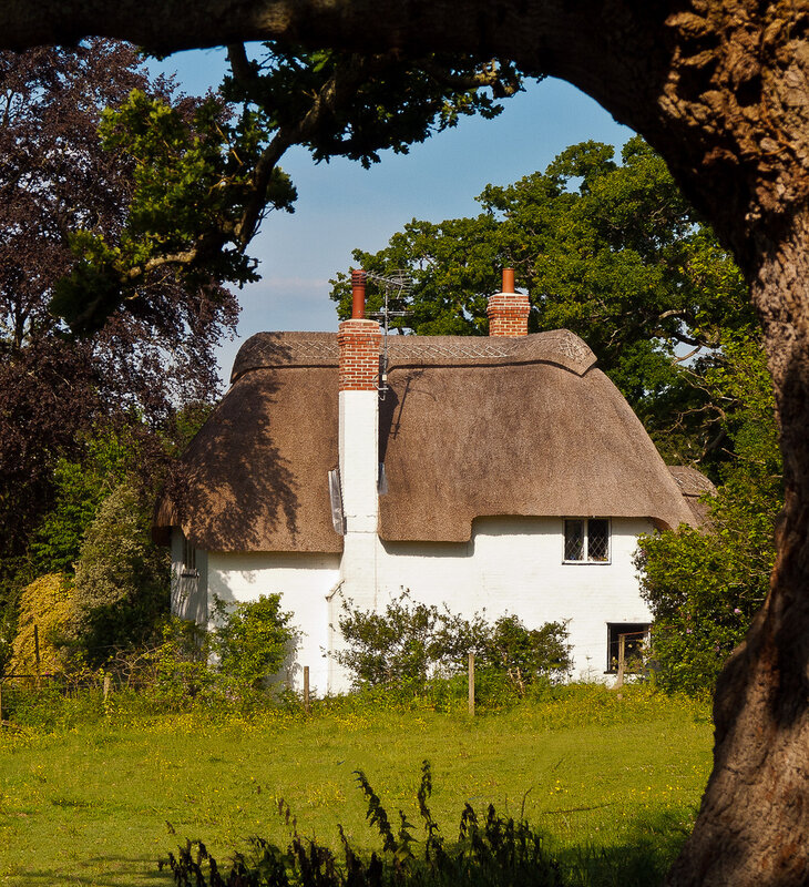 A pretty thatched cottage framed by an old Oak tree at Highwood