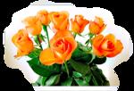 Роза желтая