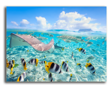 Французская Полинезия. Colorful fish, stingray and black tipped sharks underwater in Bora Bora lagoon. Фото BlueOrange Studio. shutterstock