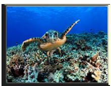 Сейшелы. Seychelles. Фото aqua4 - shutterstock