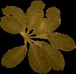 feli_l_foliage2a.png