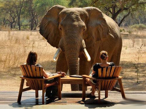 В Таиланде слон проглотил мобильный телефон туристки