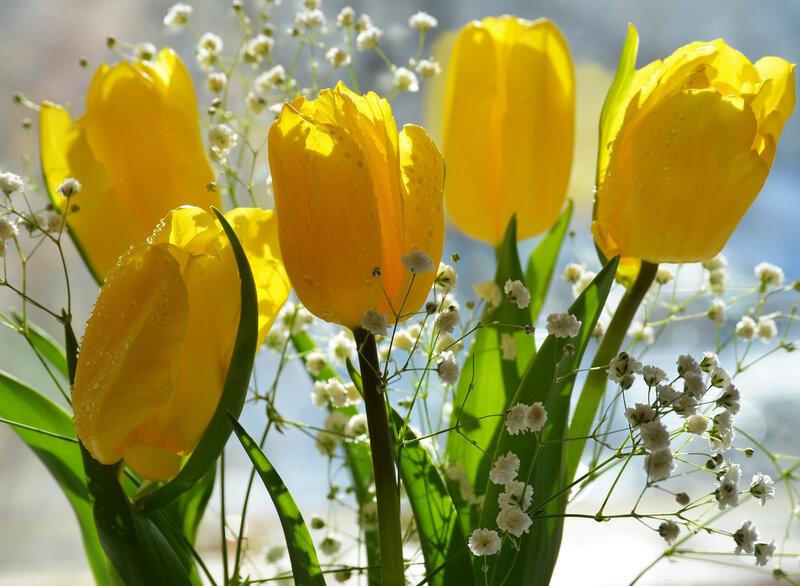 Обои на рабочий стол цветок жизни может