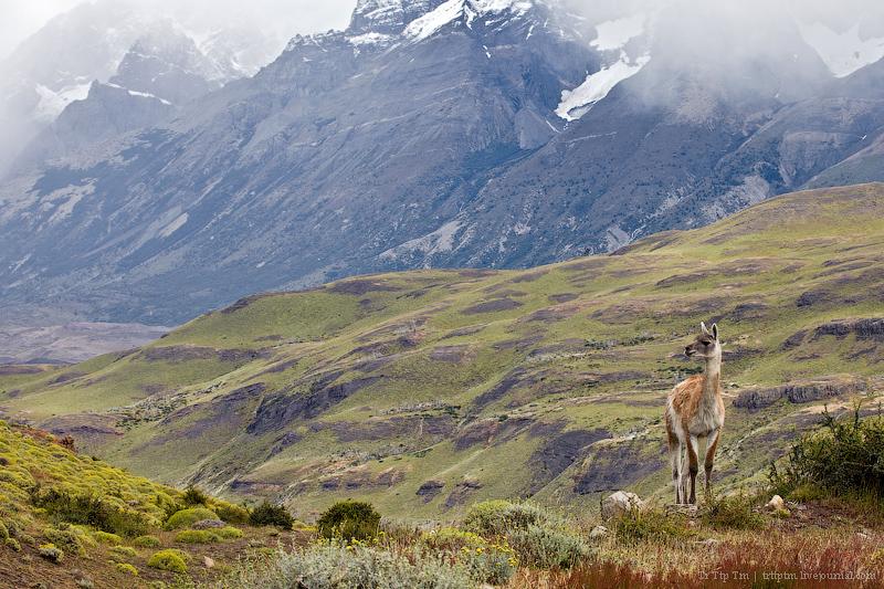 1. Восхождение к Голубым Башням и животный мир Южной Патагонии