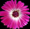 Скрап-набор Crazy Pink 0_b8bcd_61d3173c_XS