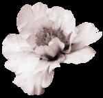 saskia_enapesanteur (48).png