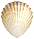 Flergs_By-The-Sea_Shell1.PNG