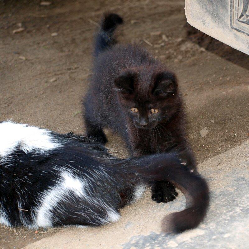 Кошки и котята спасателей P4281386.jpg
