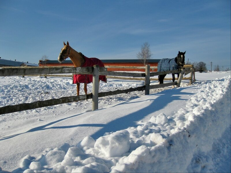 Лошади в леваде