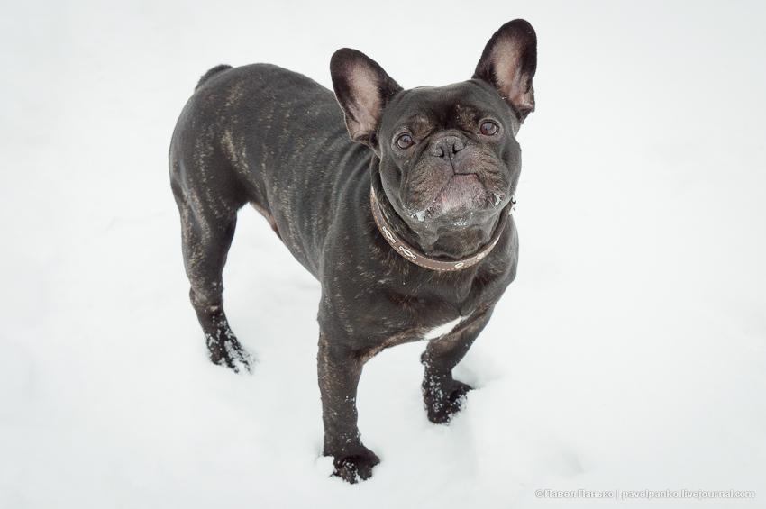 собака животные панько pavelpanko.livejournal.com