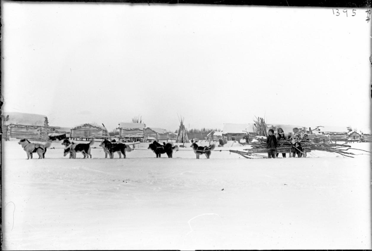 Перевозка древесины в собачьей упряжке, Сибирь, 1901