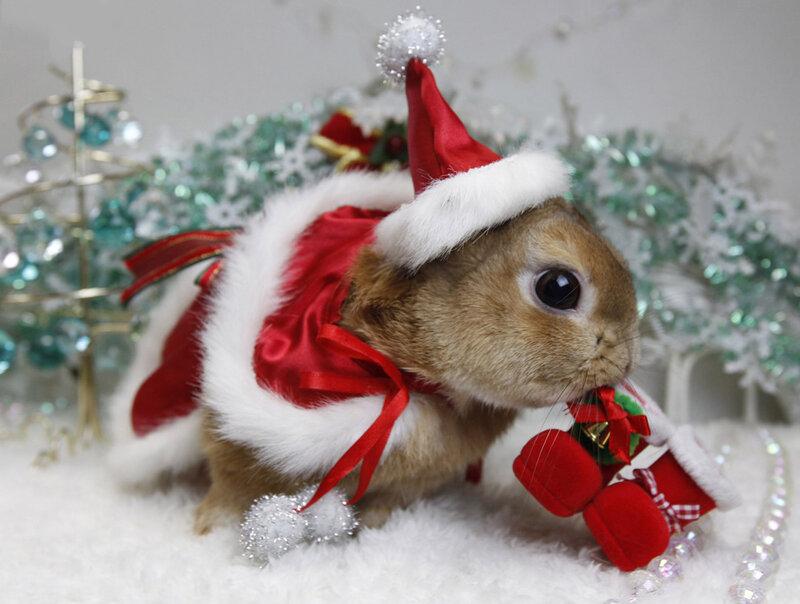 Картинки на новый год животные, святым
