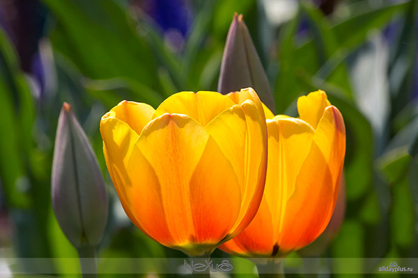 Я люблю все цветы, часть 36