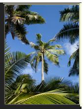 Сейшелы. Palms and Sky. Фото Elena Kozlova - Depositphotos
