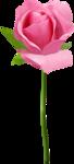 CharlieNco_ Sweet Valentine_Rose Pink 2.png