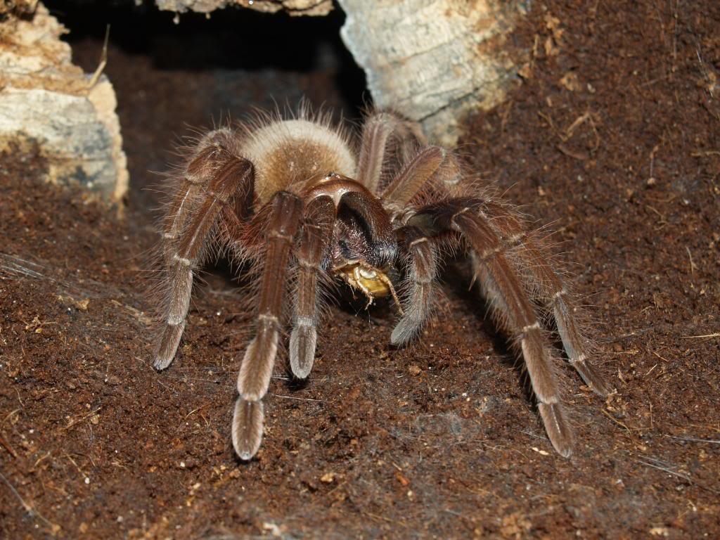 внешнему картинка большой паук в мире еще растение известно
