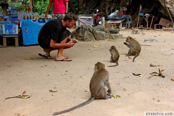Банда обезьян нападает на беззащитного мужчину