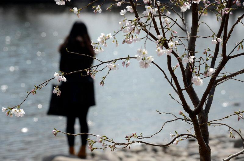 Ранняя весна в пекинских парках. Фотографии